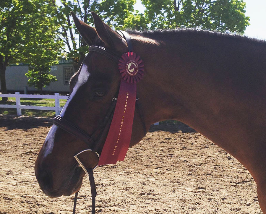 Horses For Sale – Shannondell Sales